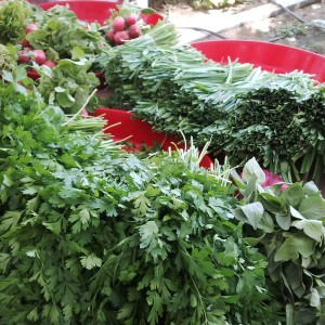 Mixed fresh organic herbs