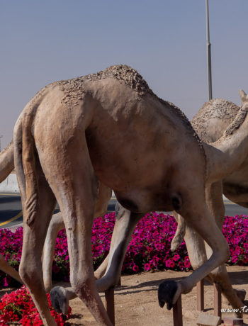 Camel monument outside Dubai Camel Hospital