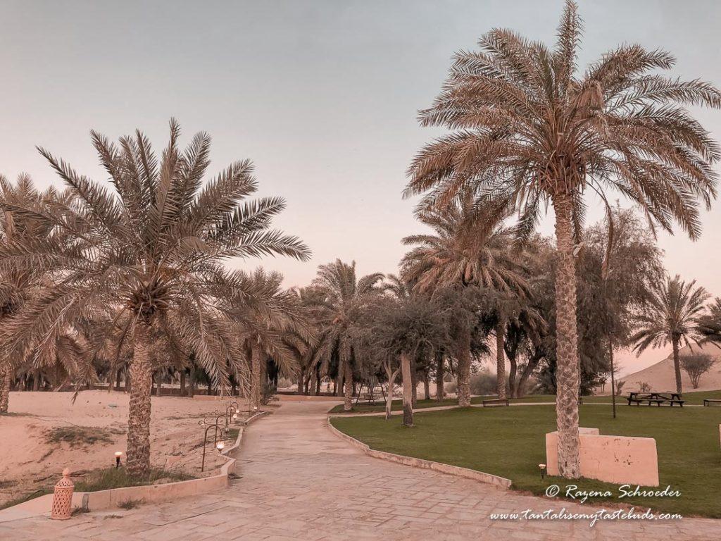 Dubai Evening Desert Safari