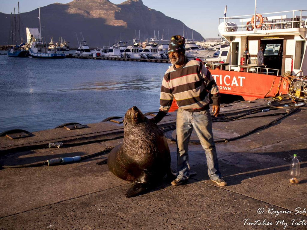 Hout Bay Harbour view - Seal